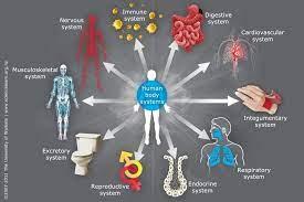 HWEL2001 Body Systems And Disease Assignment Part B-Laureate International University Australia.